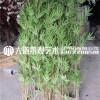 仿真竹子室内装饰竹子隔断挡墙造景假竹子仿真植物